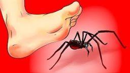 CHto delat esli vy uvideli pauka 256x144 c - ЧТО ДЕЛАТЬ, ЕСЛИ ВЫ УВИДЕЛИ ПАУКА-