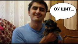 Maks Maksimov kupil SOBAKU. Jorkshirskij terer 256x144 c - МАКС МАКСИМОВ КУПИЛ СОБАКУ. ЙОРКШИРСКИЙ ТЕРЬЕР-