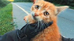 Spas kotika Mototsiklisty pomogayut zhivotnym 256x144 c - СПАС КОТИКА! МОТОЦИКЛИСТЫ ПОМОГАЮТ ЖИВОТНЫМ!-dtp-videoregistratorov